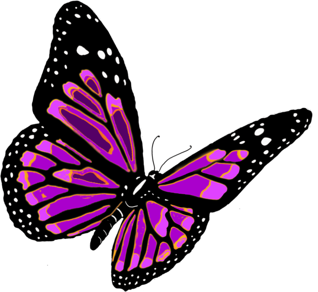 butterfly_PNG1054
